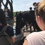 Police horse at Green Park fountain
