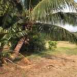 Photo of Maui Tropical Plantation