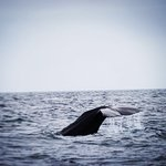 Photo of Sea Safari Andenes