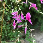 Giardini La Mortella照片