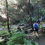 Brandy Creek Falls Foto