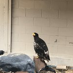 Eagle Heights Wildlife Foundation