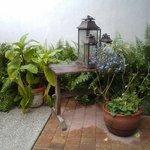 Beautiful plants along the patio area.