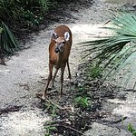 We saw a couple of deer on the swamp buggy ride.