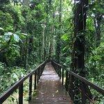 Photo de Cahuita National Park