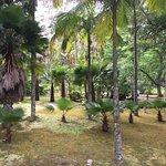 Photo of Terra Nostra Gardens