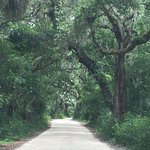 The path to the Ribault Club