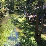 صورة فوتوغرافية لـ The Willow Tree