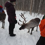 Getting to Know the reindeer while on the walk.
