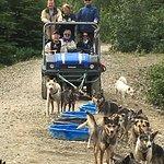 Sleg dogs at the Tutshi Lake Sled Dog Camp