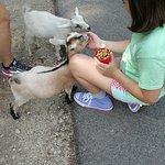 Feeding the adorable baby goats!