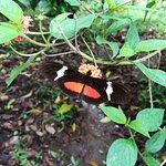 2 personas en una mariposa