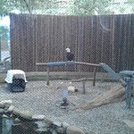 Majestic Bald Eagle!