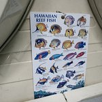 Some of the reef fish you might see of the tour.