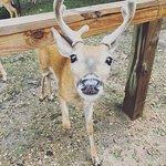 Photo de Wisconsin Deer Park