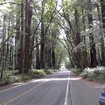 Foto de Avenue of the Giants