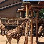Cheyenne Mountain Zoo照片