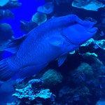 Foto di Palma Aquarium