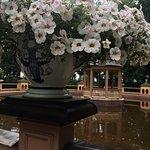 Photo of Summer Garden