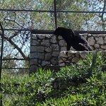Фотография Parco Zoo Punta Verde