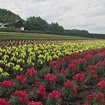 Foto de Farm Tomita