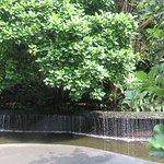 botancial gardens singapore