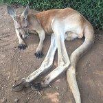 صورة فوتوغرافية لـ Kentucky Down Under Adventure Zoo