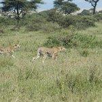Photo of Licaon Tours and Safaris