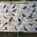 Birds in the gardens