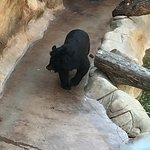Bear at Three Bears
