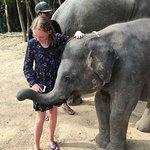 Cheeky baby elephant!