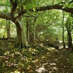Innisfallen Islandの写真
