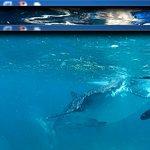 Photo of Oslob Whale Shark Watching