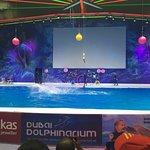 Photo of Dubai Dolphinarium