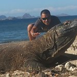 The giant living Lizard at Komodo national Park