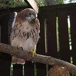 Carolina Raptor Center Foto