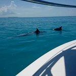 Фотография Wild About Dolphins