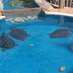 Piscina com tartarugas