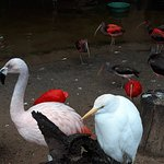 Photo of Parque das Aves