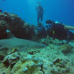 Oahu Diving resmi
