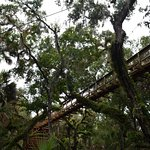Canopy walk from the ground