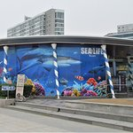 Sea Life Busan Aquarium is next to Haeundae Beach.