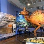 Foto di San Diego Natural History Museum