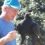 A Verreaux's Eagle with its handler. Clearly mutually comfortable and loved.