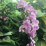 Lots of beautiful orchids