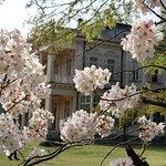 桜と都立岩崎邸庭園洋館