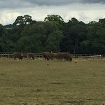 Photo of Fota Wildlife Park