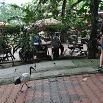 Birds roamed freely among human visitors