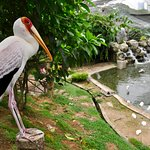 A Yellow-billed Stork stood and posed a couple of feet away