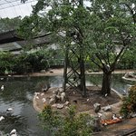 Flamingoes, pelican, peacocks, storks, and crowned pigeons share this park environment